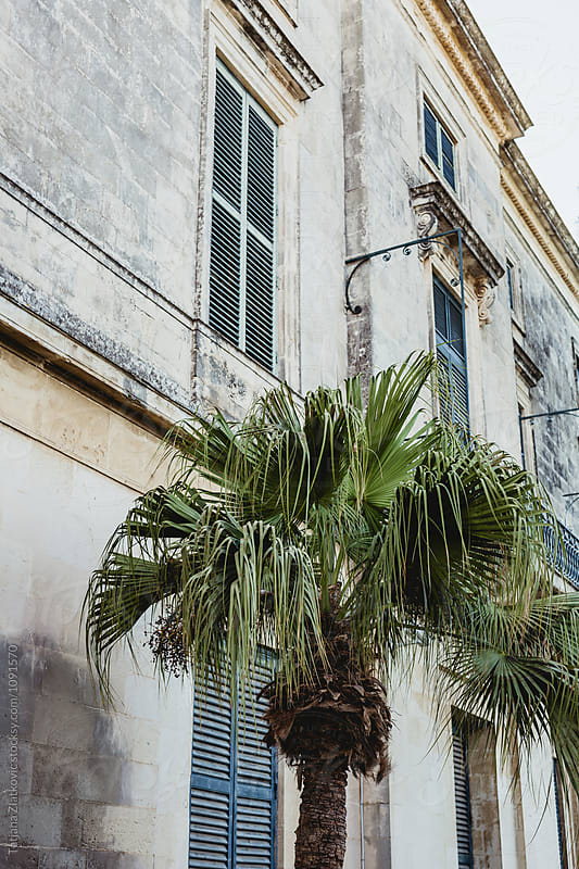 Palm in front of Palace by Tatjana Zlatkovic for Stocksy United