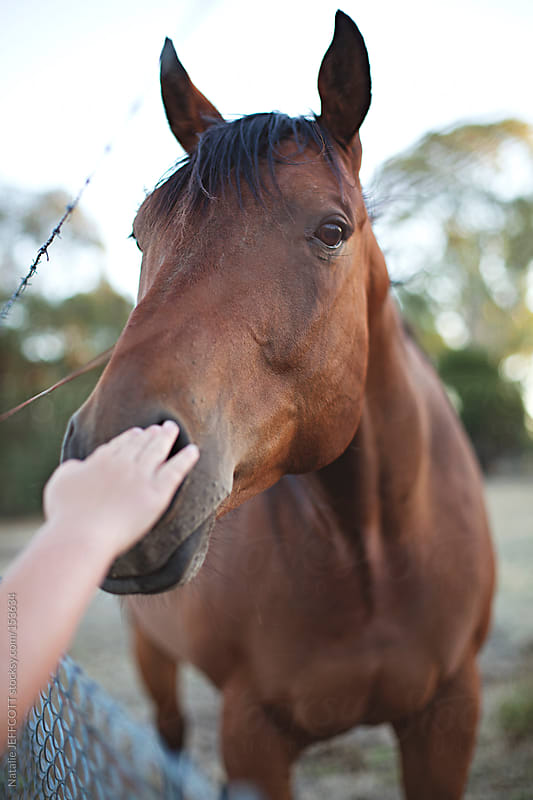 Young child pats a beautiful chestnut horse through a fence in the country by Natalie JEFFCOTT for Stocksy United
