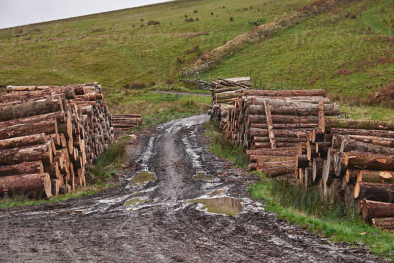 Timber stacks and track on Mountainside. Cumbria, UK. by Liam Grant for Stocksy United