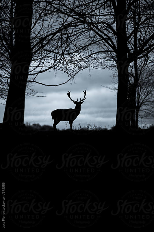 Silhouette of a beautiful deer in winter by Luca Pierro for Stocksy United