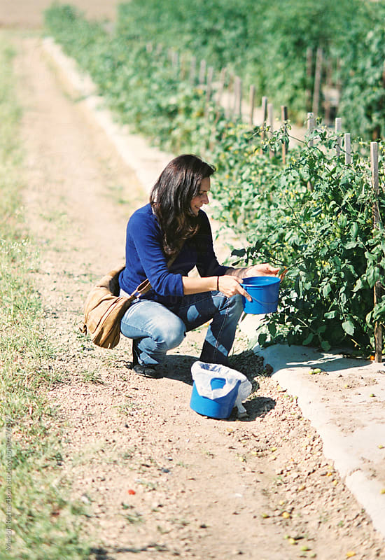 Women picking strawberries by Marlon Richardson for Stocksy United