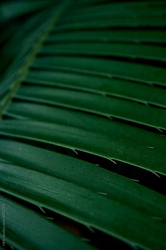 Abstract Green Tropical Leaf Background. Close up by HEX. for Stocksy United