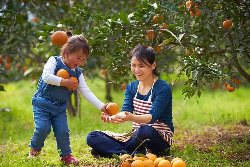 lovely little asian girl in the orange farm with her mother by Bo Bo for Stocksy United