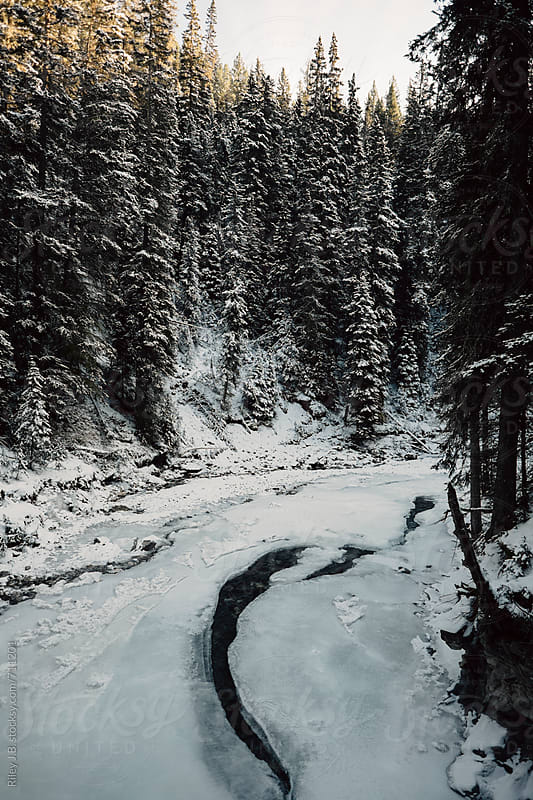 A frozen river surrounded by large pine trees by Riley J.B. for Stocksy United