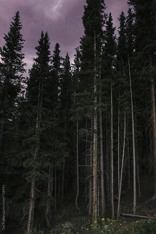 approaching evening in the woods by Tod Kapke for Stocksy United