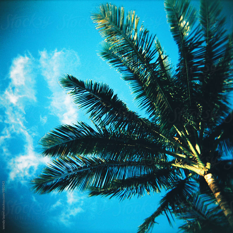 vivid green palm tree against blue sky by wendy laurel for Stocksy United
