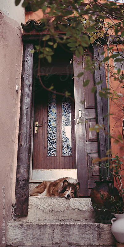 Dog at entrance in Rovinj by Robert Kohlhuber for Stocksy United