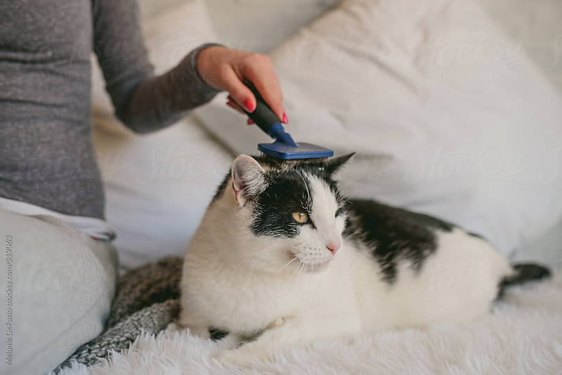 kitty love by Melanie DeFazio for Stocksy United