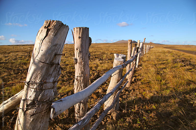 Leaning rustic wooden fence on a golden farm paddock at sunrise, Easter Island, Chile by Jaydene Chapman for Stocksy United