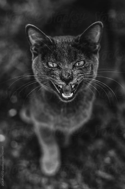 Roaring Cat by ZOA PHOTO for Stocksy United