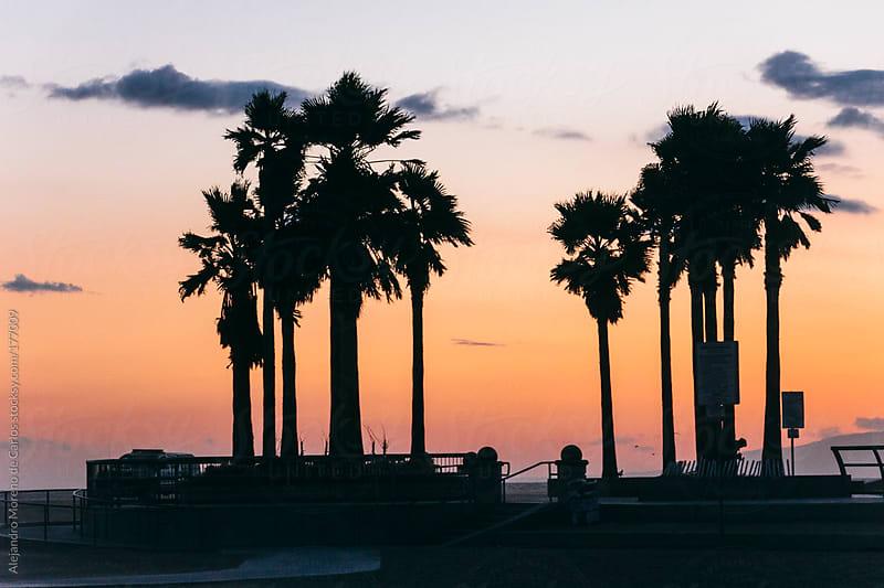 Palm trees on beach seafront - promenade at sunset. Venice beach, Los Angeles, California by Alejandro Moreno de Carlos for Stocksy United