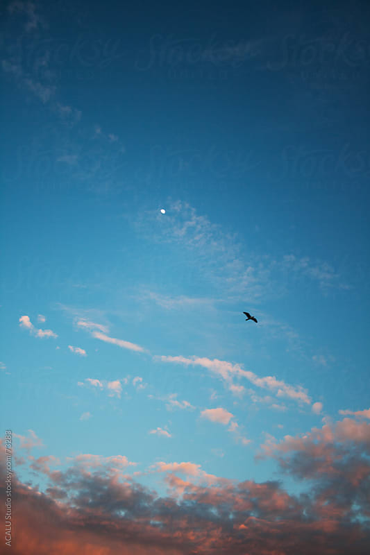 Seagull flying near the moon and clouds by ACALU Studio for Stocksy United