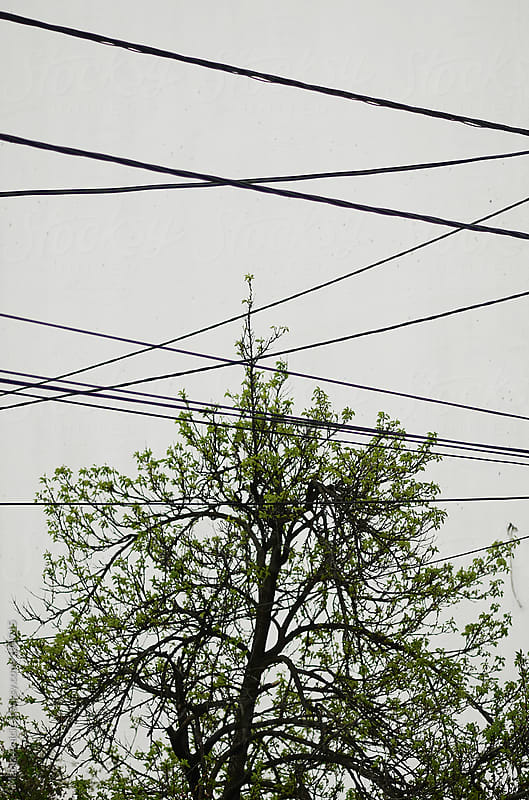 Tree and wires ,contrast to white wall by Marija Anicic for Stocksy United