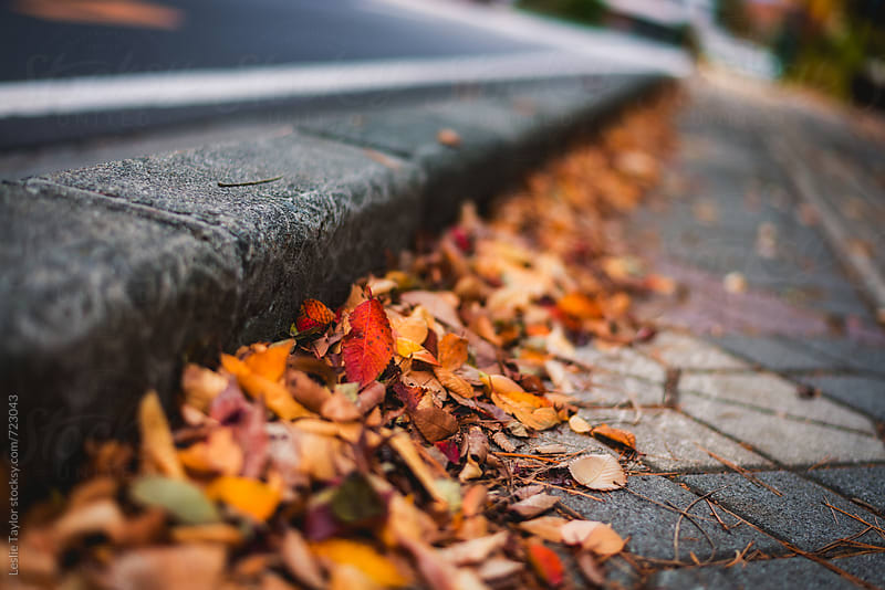 Autumn Leaves Along A Sidewalk by Leslie Taylor for Stocksy United