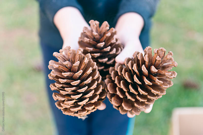 collecting pine cones by Gillian Vann for Stocksy United