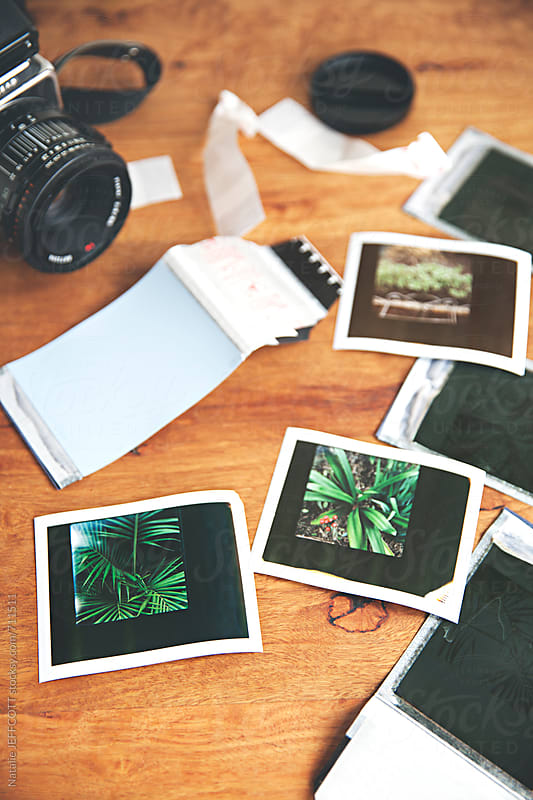 Table top view of retro style polaroid instant film prints from the garden. by Natalie JEFFCOTT for Stocksy United