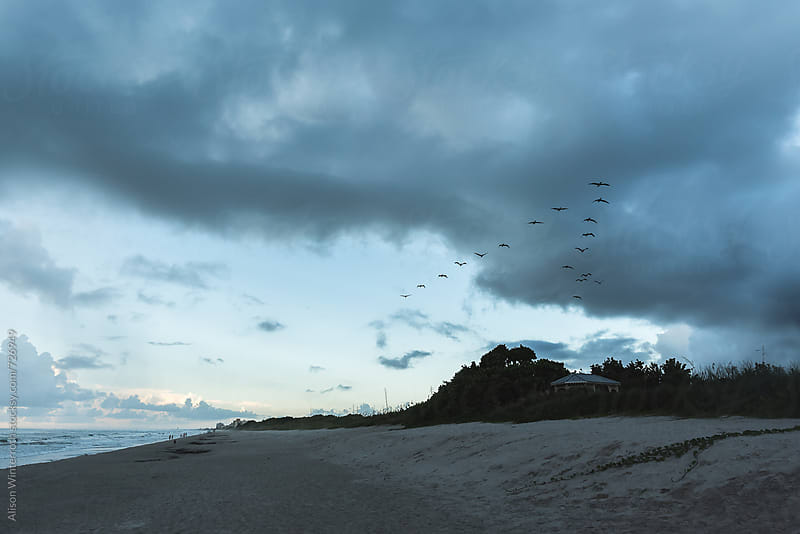 Pelicans Flying Over A Beach That Is About To Storm by Alison Winterroth for Stocksy United