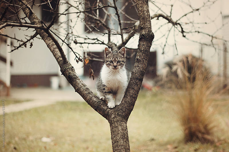 Cute little kitten sitting on a tree and looking at camera by Jovana Rikalo for Stocksy United