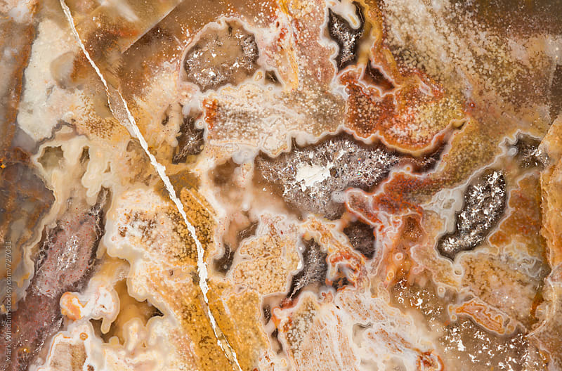 Petrified wood abstract patterns, closeup by Mark Windom for Stocksy United