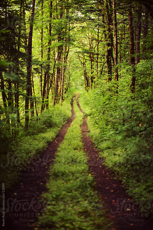 Lush Green Forest Road by Kevin Russ for Stocksy United