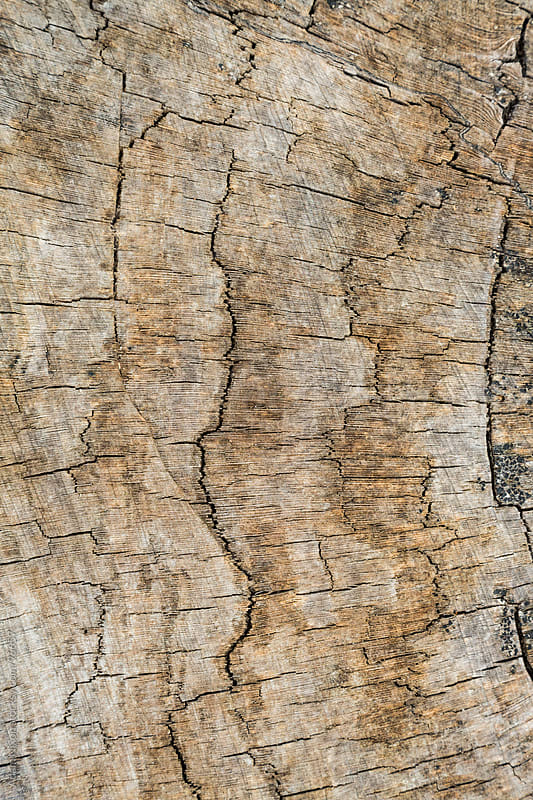 Weathered Tree Trunk by Adam Nixon for Stocksy United
