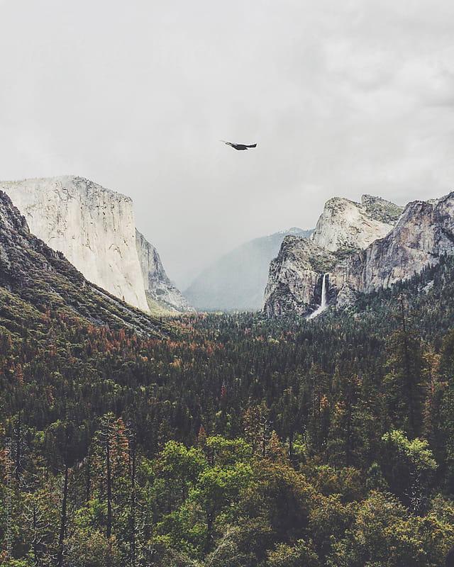 Yosemite Valley by Sean Horton for Stocksy United