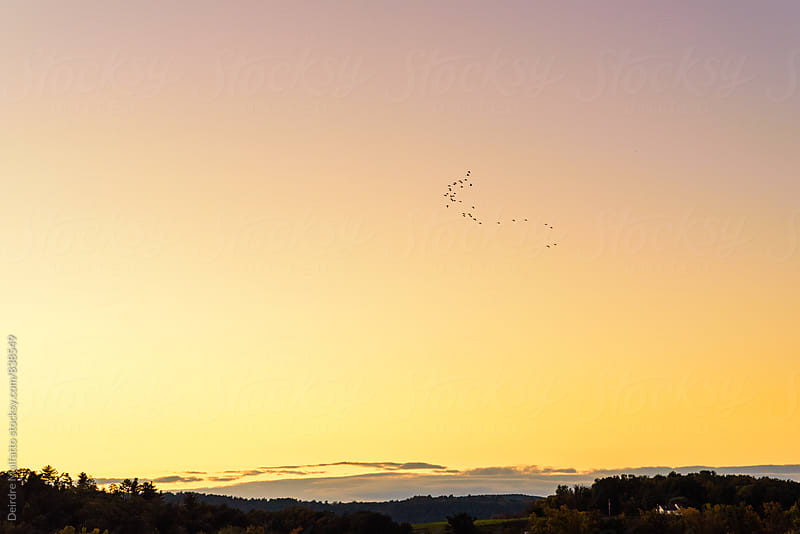 Sun setting over valley with birds in sky by Deirdre Malfatto for Stocksy United