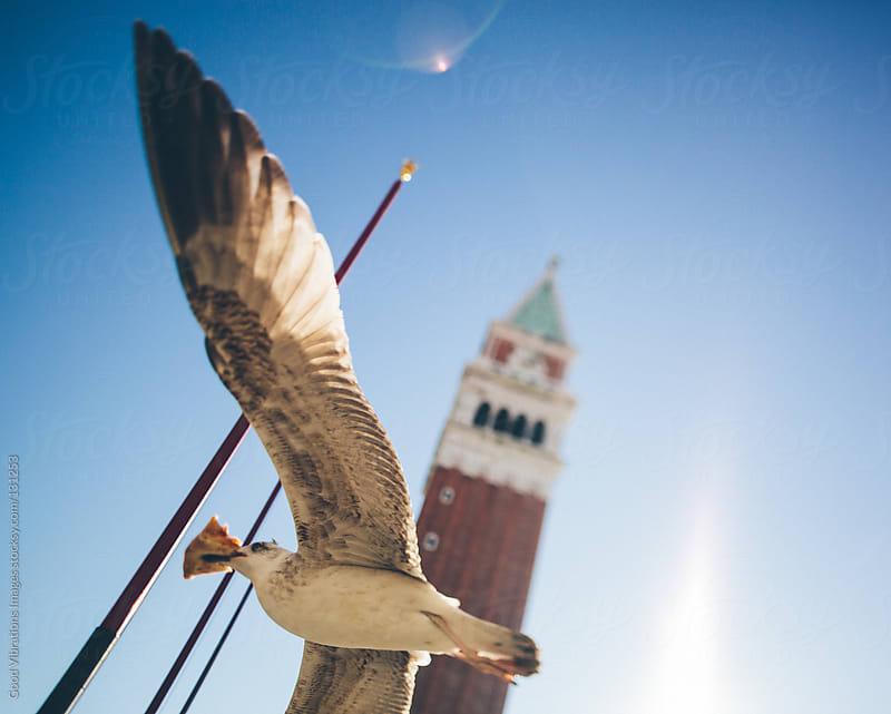 Seagull in Venice by Good Vibrations Images for Stocksy United