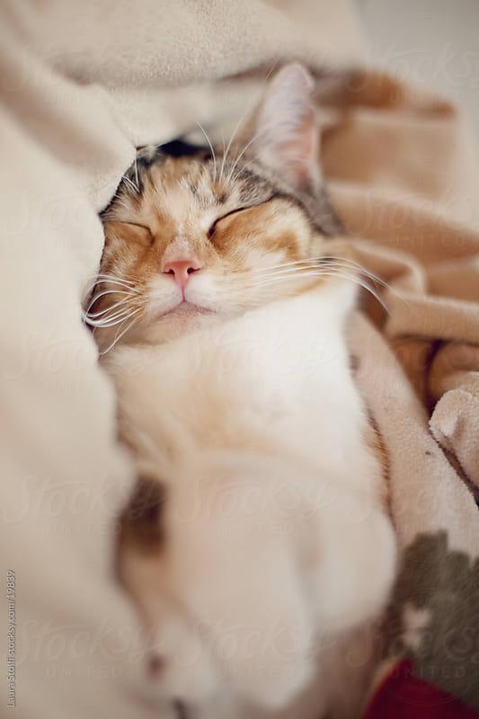 Tabby cat sleeping peacefully in warm woolen blanket by Laura Stolfi for Stocksy United
