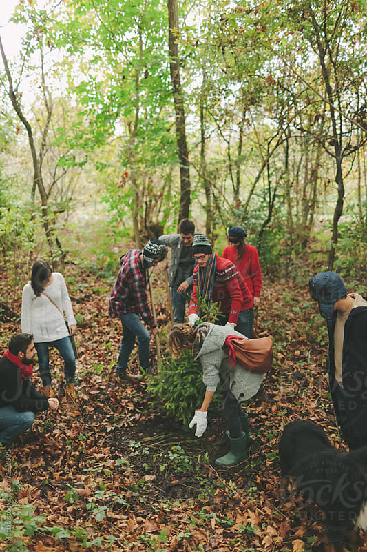 Group of Friends Planting a Tree by HEX. for Stocksy United