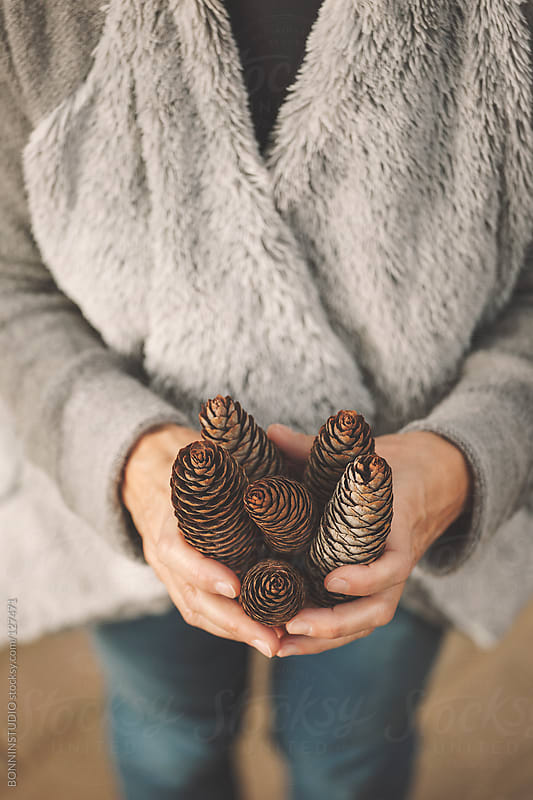 Closeup of hands woman holding brown pinecones. by BONNINSTUDIO for Stocksy United