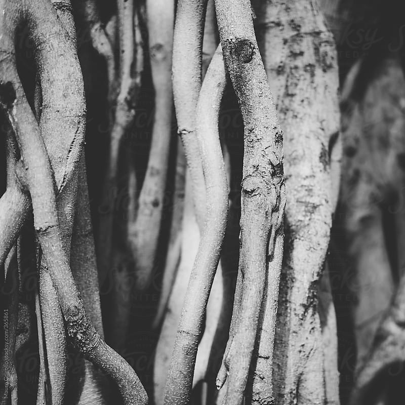 Roots by Mauro Grigollo for Stocksy United