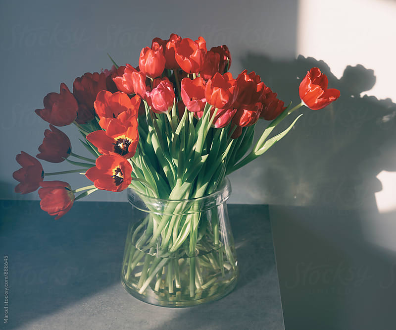 Vase with red tulips on a kitchen counter by Marcel for Stocksy United