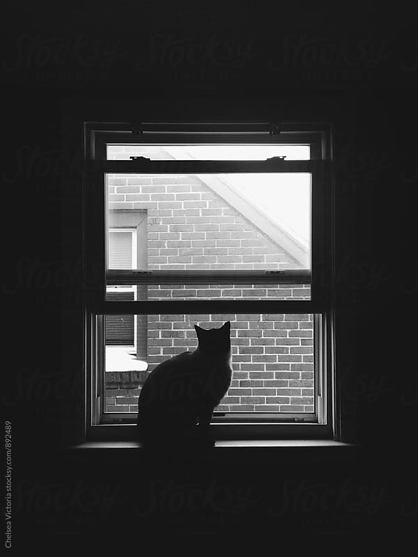A black and white portrait of a cat looking out of a window by Chelsea Victoria for Stocksy United