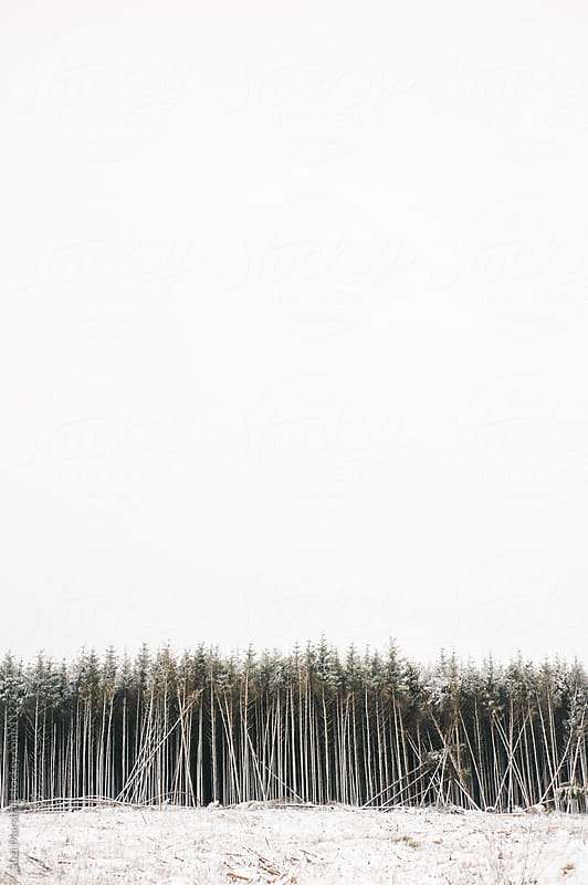 Line of trees after snowfall by Suzi Marshall for Stocksy United