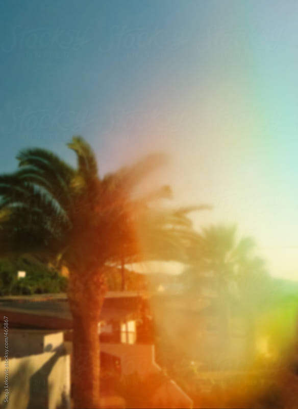 summer palm tree landscape with sunlight in blur by Sonja Lekovic for Stocksy United