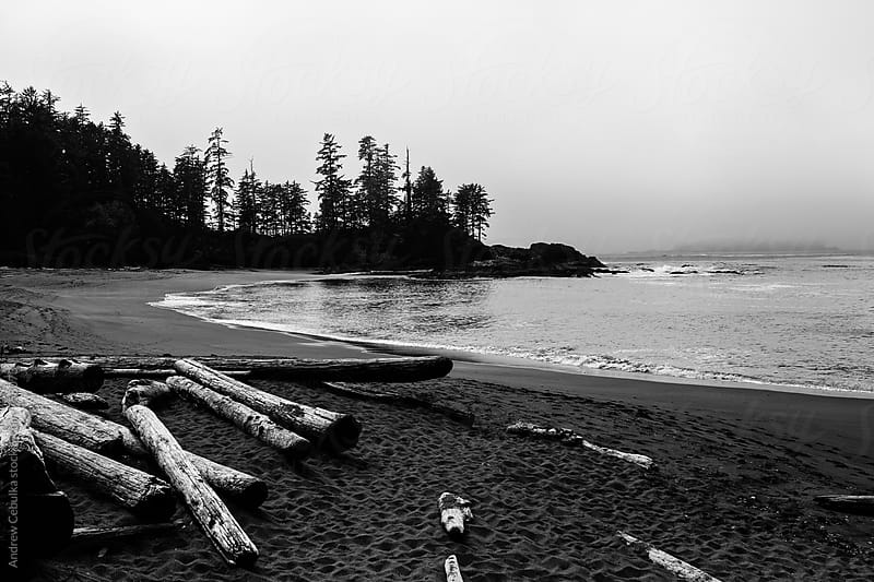 Logs on a Beach by Andrew Cebulka for Stocksy United