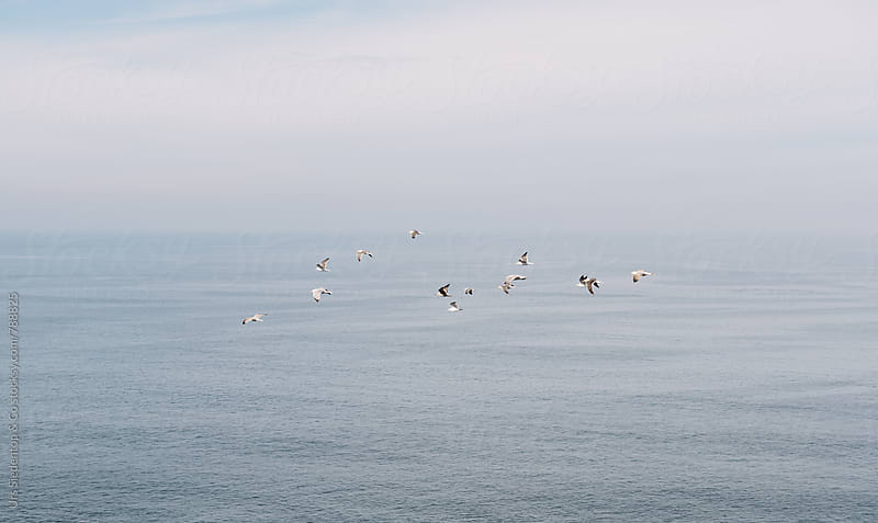 Swarm of seagulls at the atlanic ocean by Urs Siedentop & Co for Stocksy United