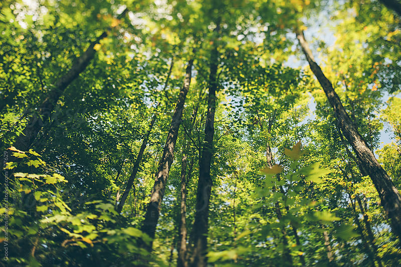 Beautiful green forest by Good Vibrations Images for Stocksy United