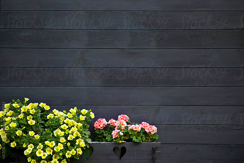 Dark Wooden Wall with Flowers by Victor Torres for Stocksy United