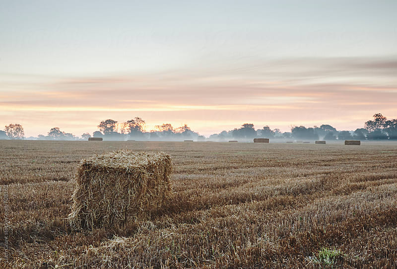 Straw bales in a mist covered field at sunrise. Norfolk, UK. by Liam Grant for Stocksy United