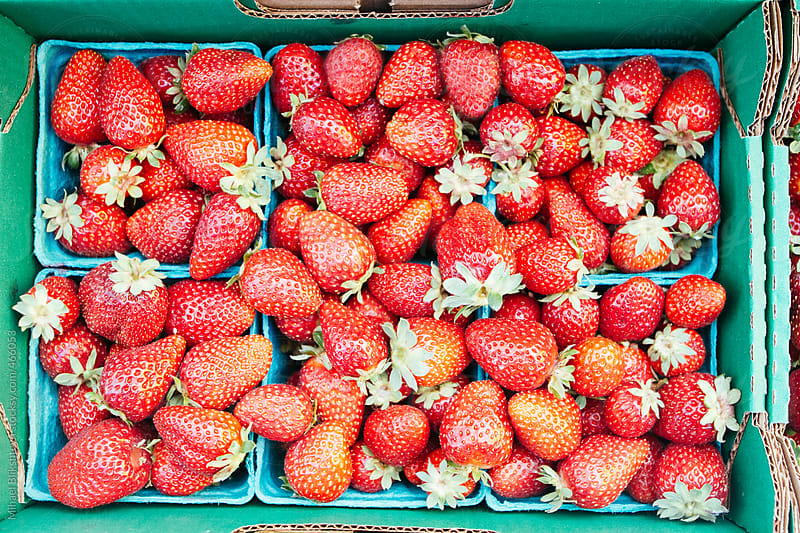Bird's eye view of fresh, local, organic strawberries in individual containers at an outdoors farmers market by Mihael Blikshteyn for Stocksy United