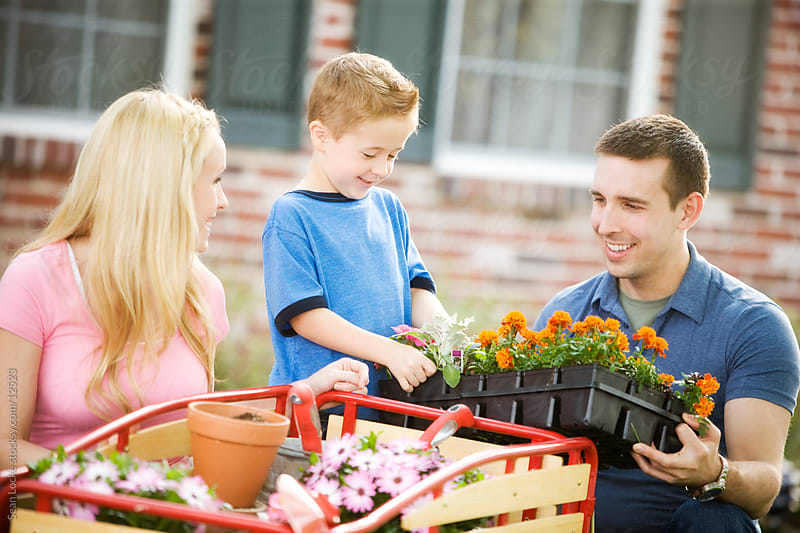 Planting: Dad Brings a Flat of Marigolds by Sean Locke for Stocksy United