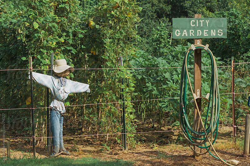 Scarecrow in a vegetable garden by David Smart for Stocksy United