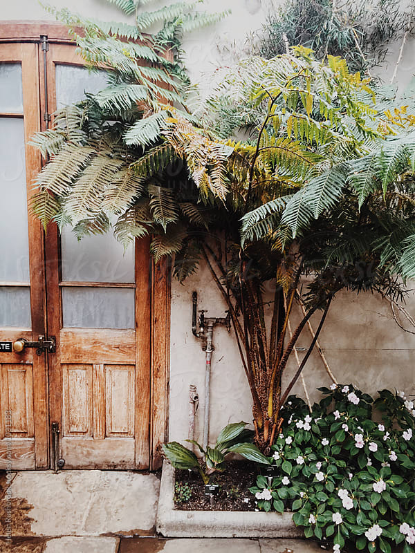 Palm tree growing next to a wooden door in a glasshouse. by Helen Rushbrook for Stocksy United