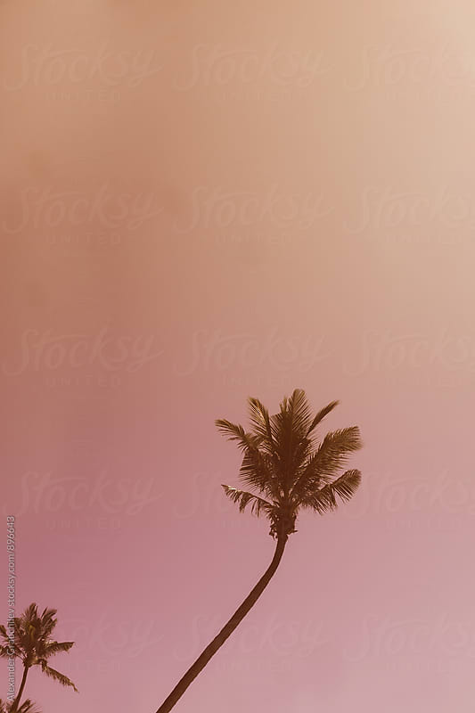 Simple Palm Tree by Alexander Grabchilev for Stocksy United