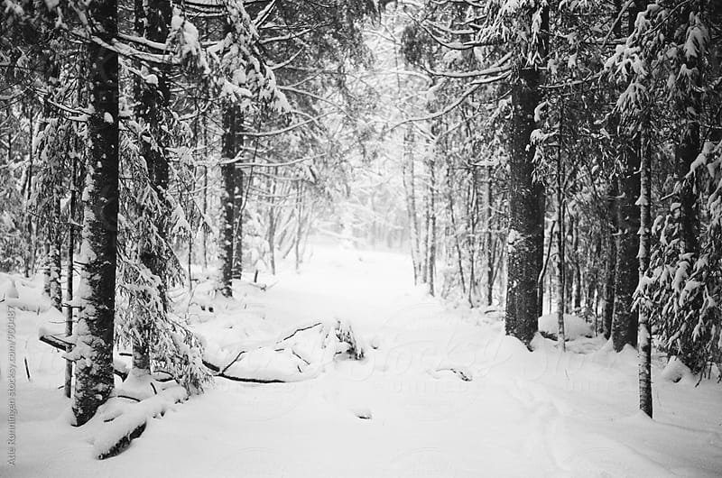A snowy path with light at the end of the tunnel by Atle Rønningen for Stocksy United