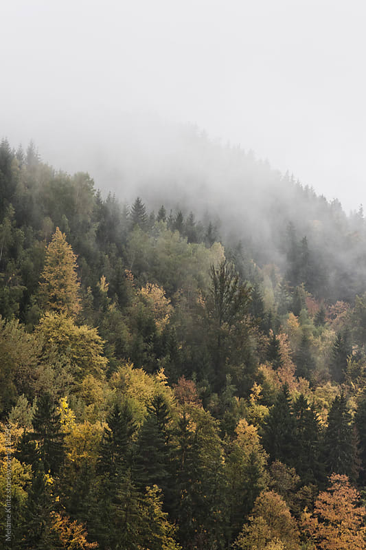 Fog rising from a forest in fall by Melanie Kintz for Stocksy United