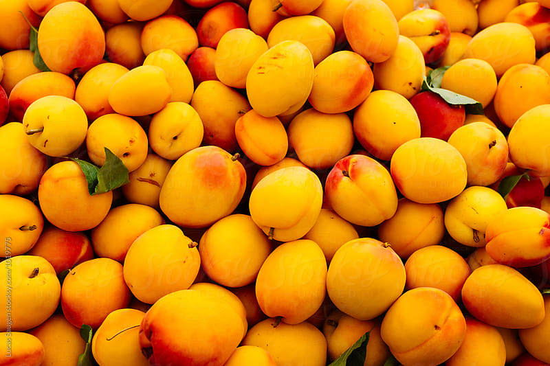 Apricots are in season at the farmer's market. by Lucas Saugen for Stocksy United