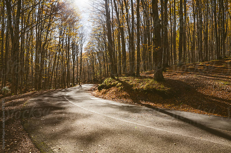 Country Road in the Woods during Autumn by Giorgio Magini for Stocksy United